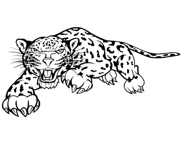 leopard 0007